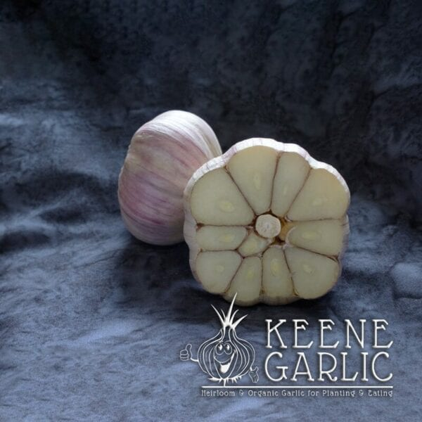 Vietnamese Red Keene Garlic Bulb