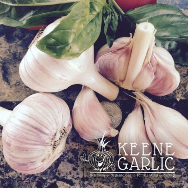 Vietnamese Red Keene Garlic