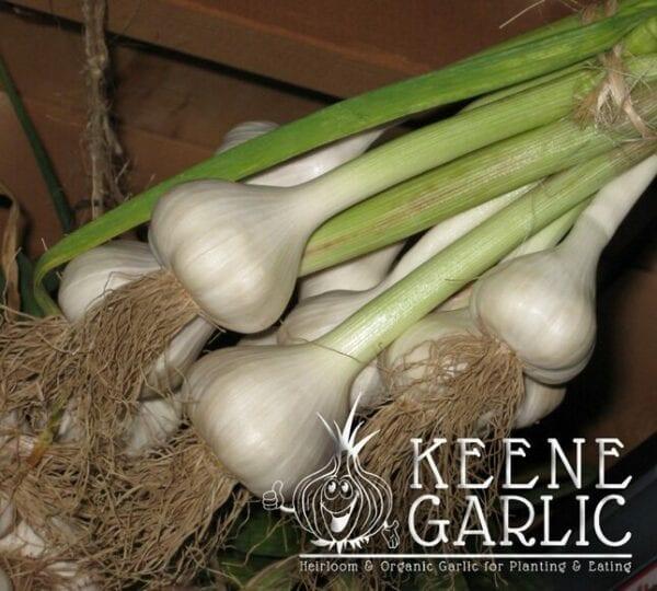 Music Garlic cured in basement