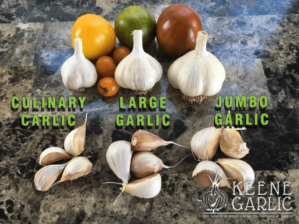 garlic-sizes-keene-organics-garlic