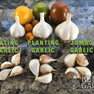 Garlic Bulb and clove size