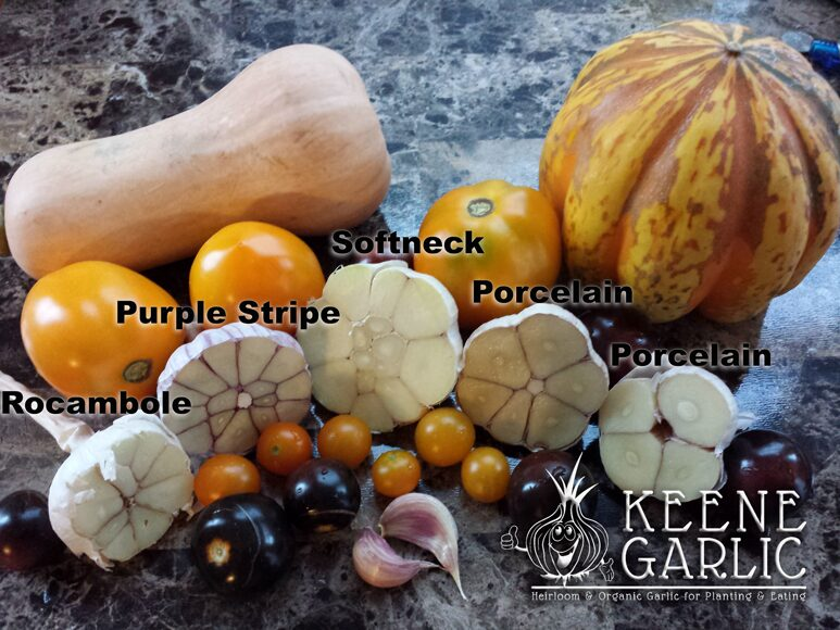 Keene Garlic garlic varieties cut in half