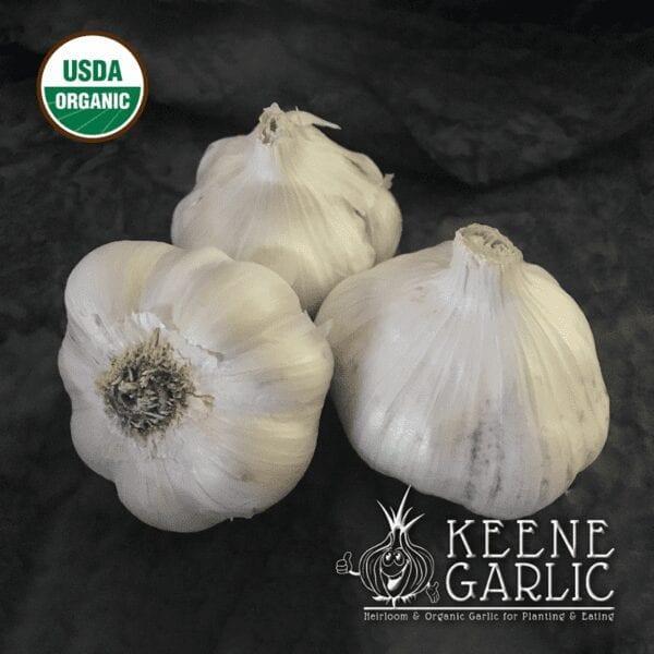 California White Garlic bulbs