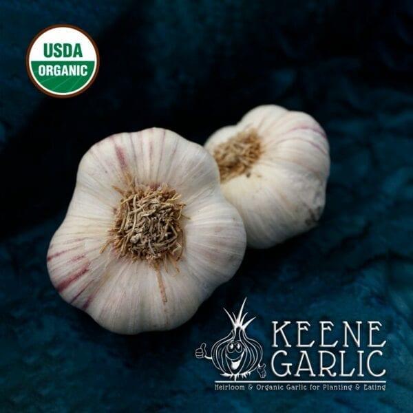 Red Toch Garlic Bulbs