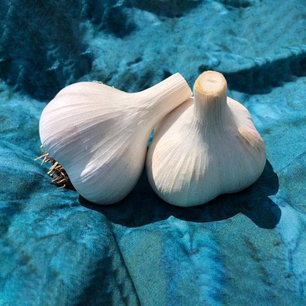 Leningrad Certified Organic Garlic Bulbs