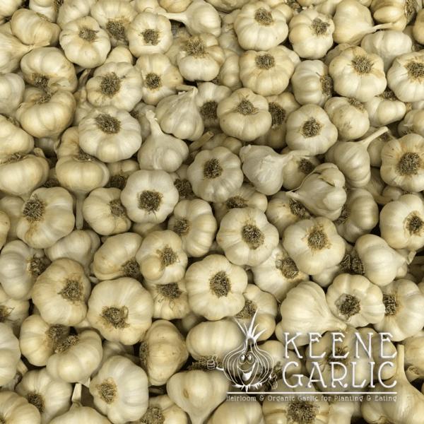 Silverwhite Garlic Bulbs