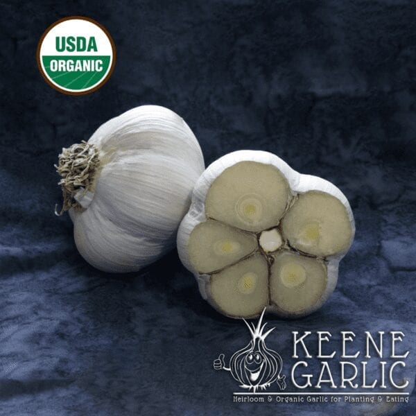 Montana Giant Garlic bulbs