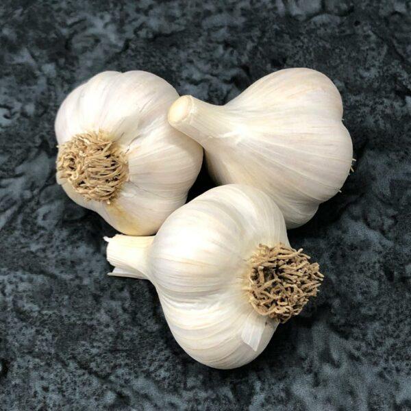 Montana Giant Organic Keene Garlic