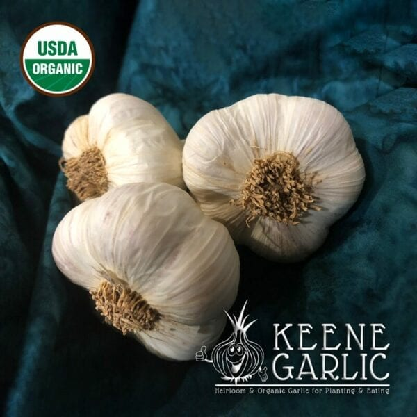 Northe Certified Organic Garlic Bulbs