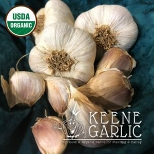Siberian Garlic Bulbs