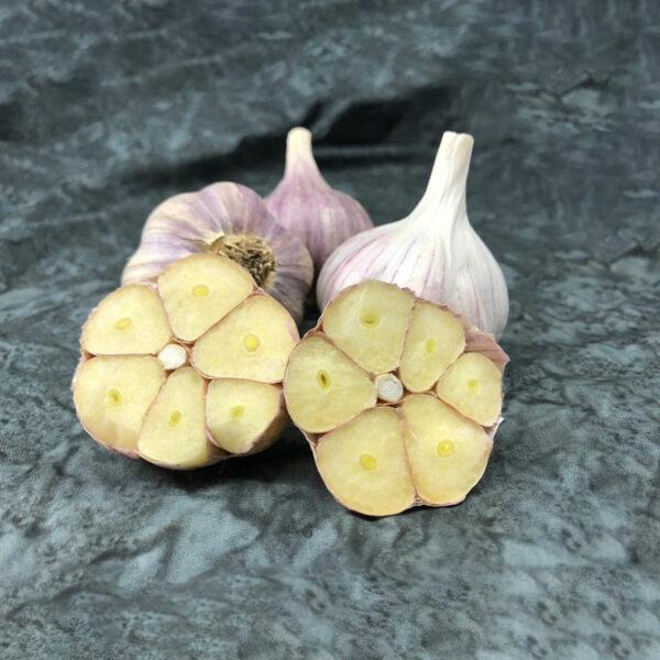 Pehoski Purple Keene Garlic