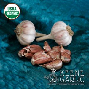 Purple Glazer Garlic Bulbs