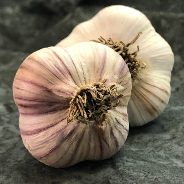 Siberian Organics Keene Garlic