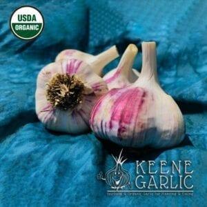 Siberian Certified Organic Garlic bulbs