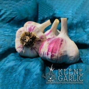 Siberian Organic Garlic Bulbs