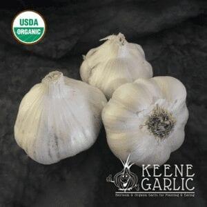 Early Italian Softneck Certified Organic Garlic Bulbs