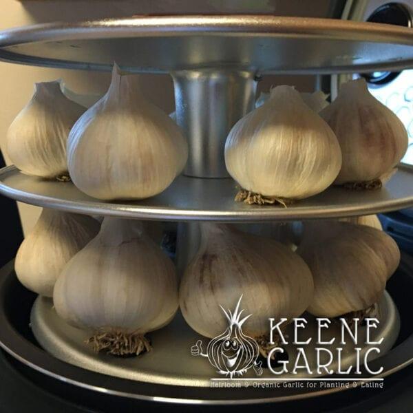 Making Black Garlic Keene Garlic