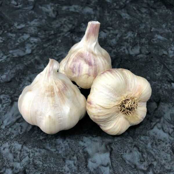 Transylvanian Certified Organic Garlic Bulbs