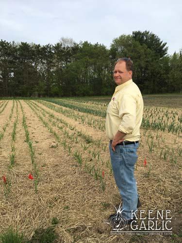 April Garlic Field