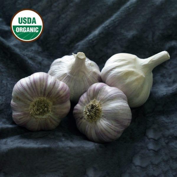 Chesnok Red Certified Organic Garlic Bulbs