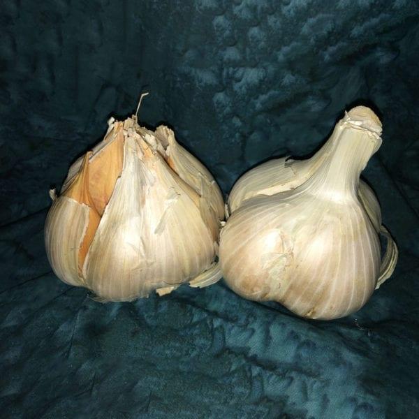 Elephant Garlic - Naturally Grown Garlic Cloves