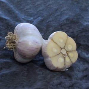 Northern White Naturally Grown Garlic Bulbs