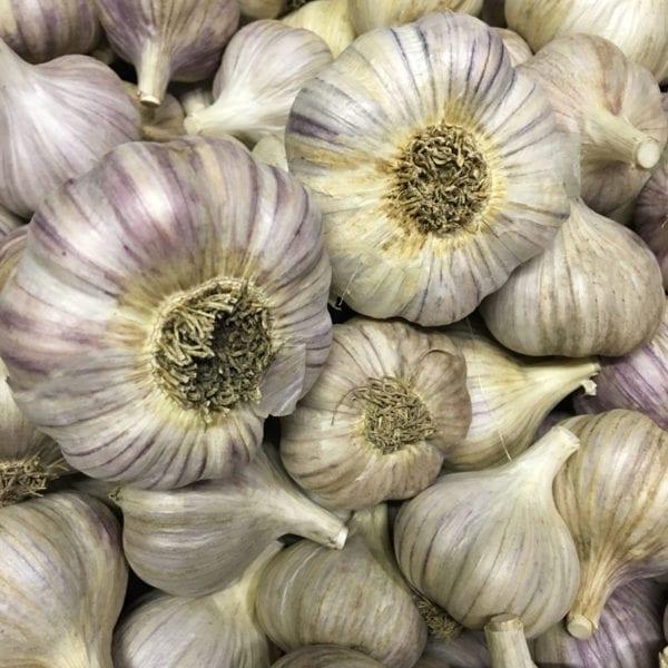 Pehoski Purple Naturally Grown Garlic Bulbs