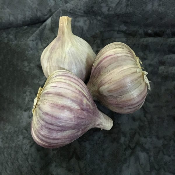 Persian Star Naturally Grown Garlic Bulbs