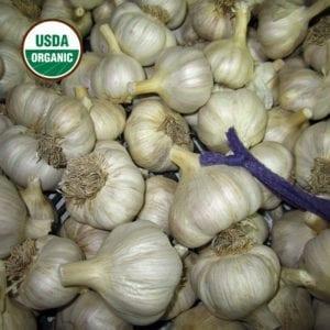 Spanish Roja Certified Organic Garlic