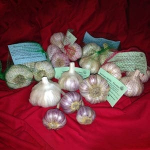 Garlic Sampler Packages