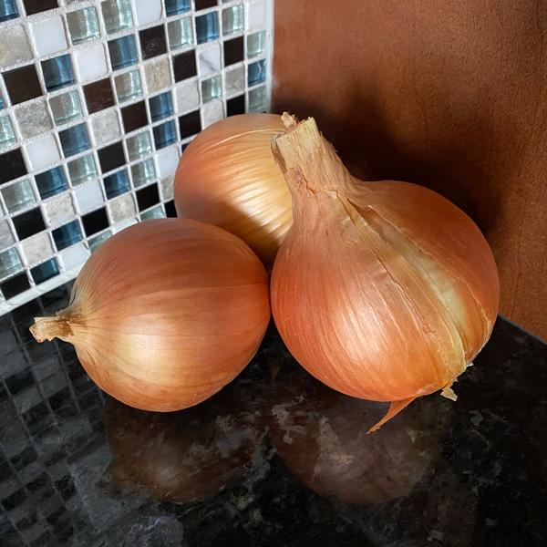 Candy Onion Plants - Certified Organic