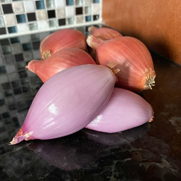 Conservor Shallots Keene Garlic
