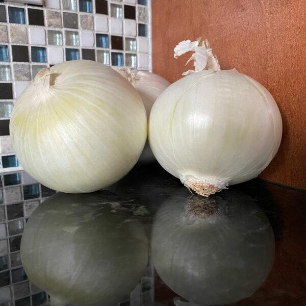 White Cloud Onion Plants Keene Garlic
