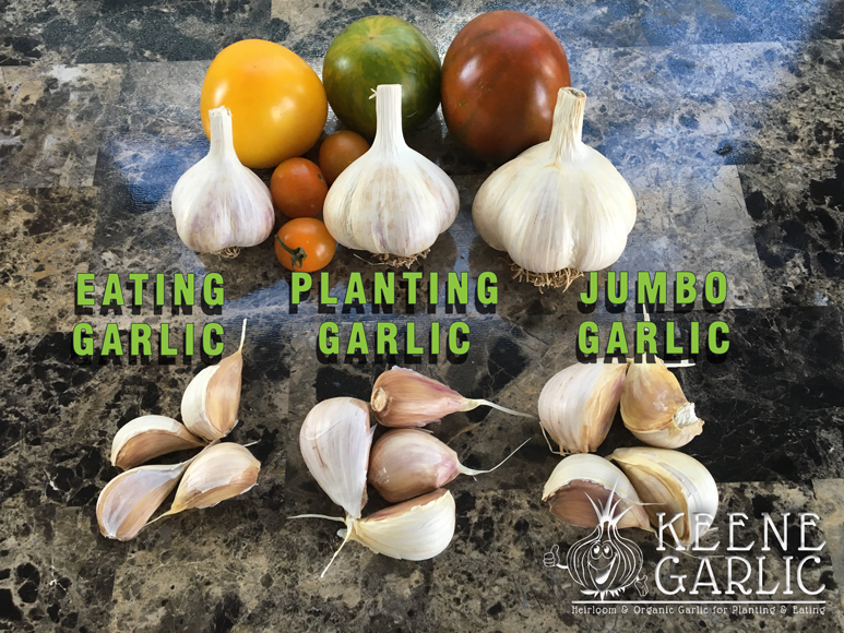 Keene Garlic Bulb Sizes
