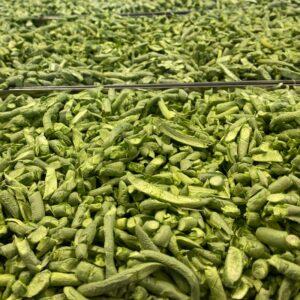 Organic-Freeze-Dried-Garlic-Scapes-Tray-Keene-Garlic