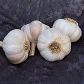 Amish Rocambole Keene Garlic
